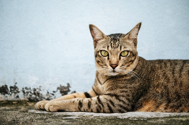 Focus closely on the tabby eyes Free Photo