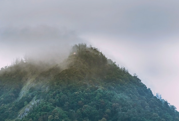 Туман, покрывающий вершину горы западные гаты, район каньякумари, индия Бесплатные Фотографии