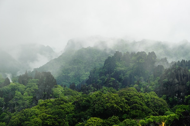 Fog covers distant trees on a limestone mountain side, laos Premium Photo