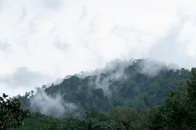 Fog on the mountain after heavy rain in thailand. Premium Photo