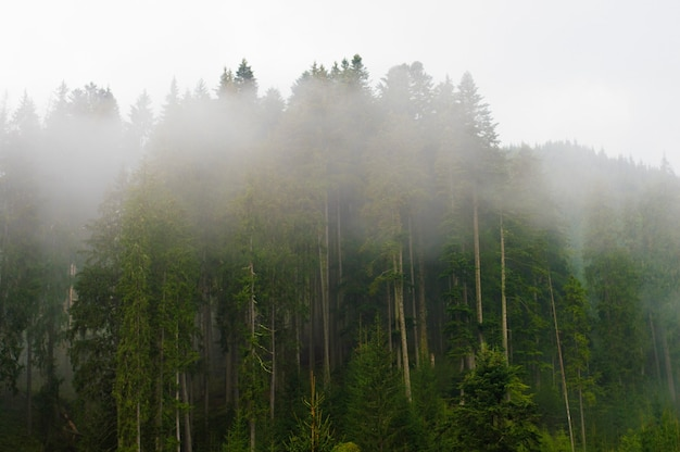 Fog in the trees, in the forest, sunset, dawn, overcast, nature, paddling Premium Photo