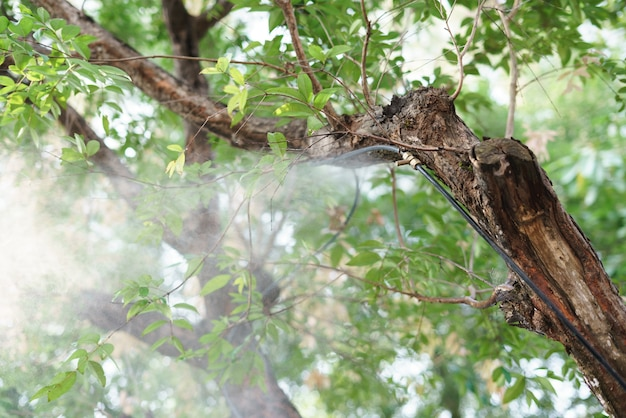 Fog water spray nozzle setup on tree for watering plant Premium Photo