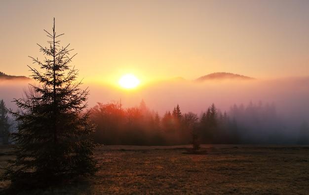 Туманный пейзаж еловый лес в тумане Premium Фотографии
