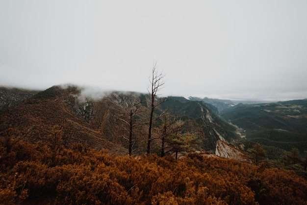 Foggy morning in autumn in a local forest Premium Photo