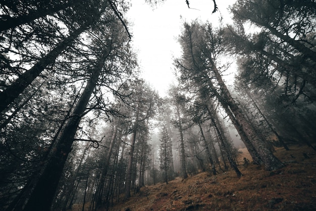 Foggy morning in a forest Premium Photo