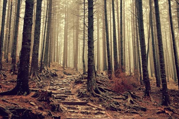 Foggy stair adventure vegetation leading Free Photo