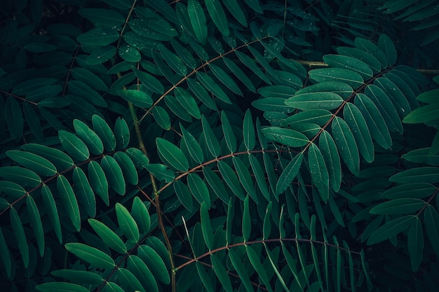 Foliage of tropical leaf in dark green with rain water drop on texture Premium Photo