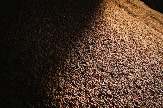 Питание валенсия паэлья традиция рис Premium Фотографии