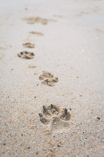 The footprint of the dog walking on the beach. Premium Photo