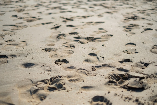Footprints on the sands of the morning air. Premium Photo