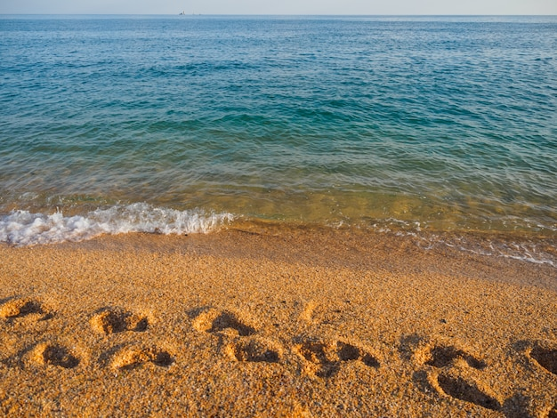 Footprints on the sea sand. sea shore Premium Photo