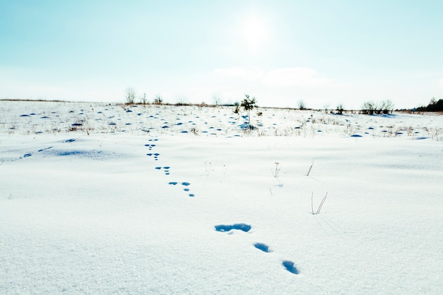 Footprints in the snowy landscape with blue sky Free Photo