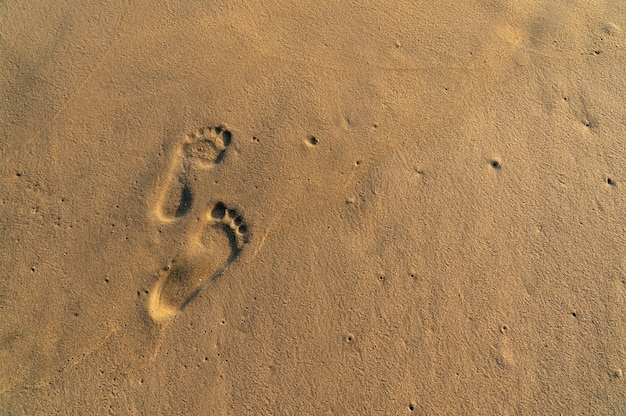 Footsteps on the yellow sand beach. Premium Photo