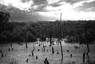 Forbidden swamp Free Photo