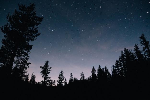 숲과 밤의 별이 빛나는 하늘 무료 사진