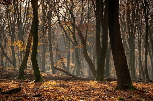 Лес, покрытый сухими листьями и деревьями под солнечным светом осенью Бесплатные Фотографии