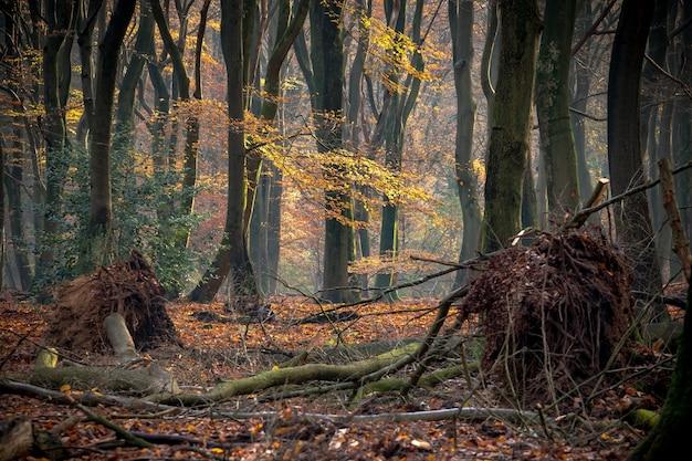 秋の日差しの下で木々や茂みに覆われた森 無料写真
