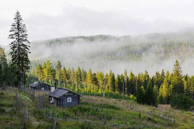 Forest covered with fog and a single house in sweden Free Photo