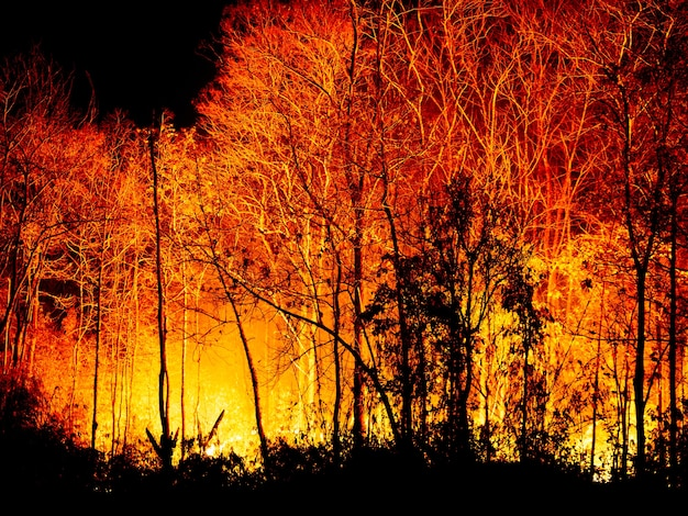 Forest fire burning at night. Premium Photo