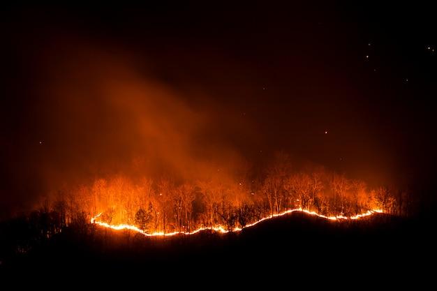 Лесной пожар горящие деревья ночью. Premium Фотографии