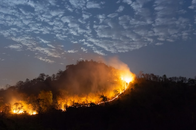 Forest fire, wildfire. Premium Photo