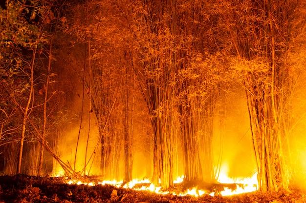 Forest fire, wildfire. Premium Photo