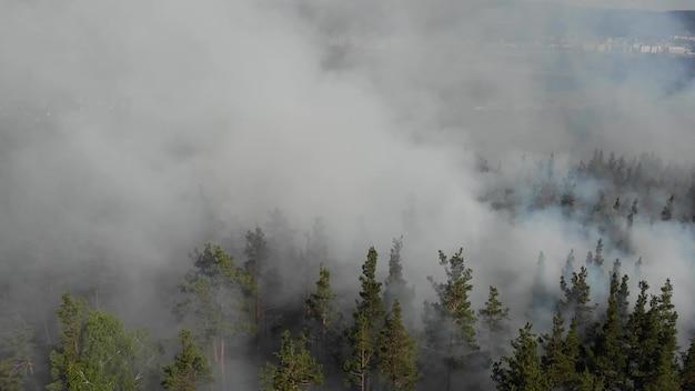 Яростно разгораются лесные пожары. Premium Фотографии