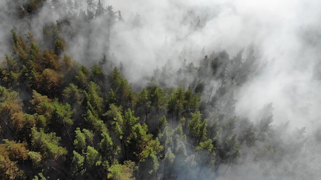 Яростно горят лесные пожары Premium Фотографии