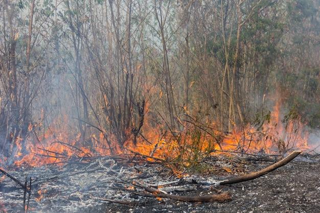 Forest fires Premium Photo