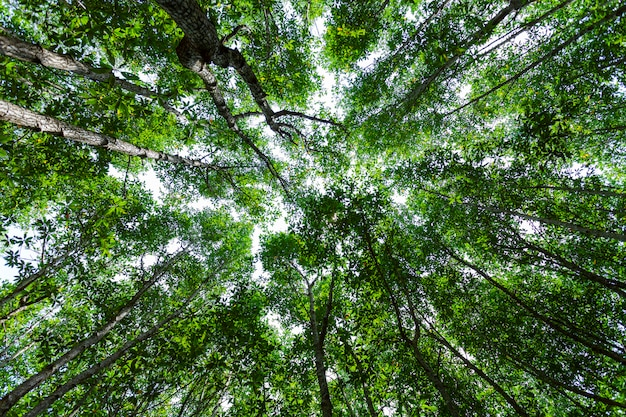 Forest growth trees. nature green mangrove forest backgrounds Premium Photo