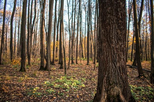 Forest leaves  autumn falls Premium Photo