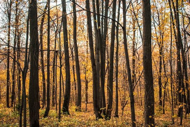 Forest leaves Premium Photo