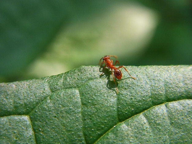 Forest meadow ant nature animal insect Free Photo