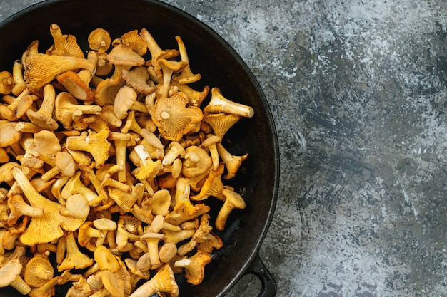 Forest mushrooms chanterelle Premium Photo