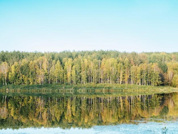 緑の木々が水に映る湖の近くの森 無料写真