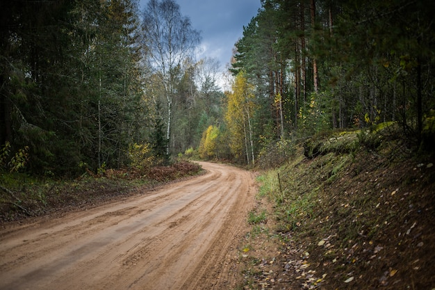 Forest road going through autumn forest Premium Photo