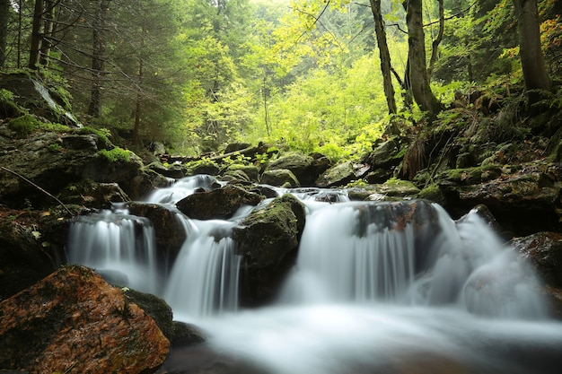 Forest stream flowing down from the mountains Premium Photo