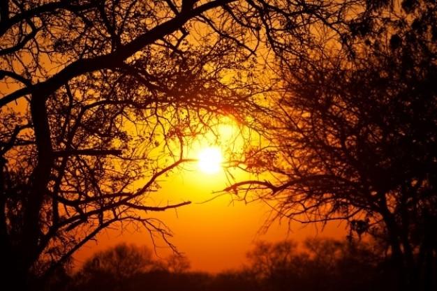 Лес восхода солнца Бесплатные Фотографии
