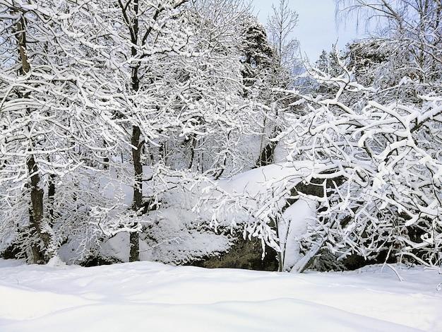 Foresta circondata da rocce e alberi coperti di neve sotto la luce del sole a larvik in norvegia Foto Gratuite