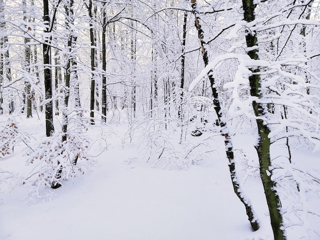Foresta circondata da alberi coperti di neve sotto la luce del sole a larvik in norvegia Foto Gratuite