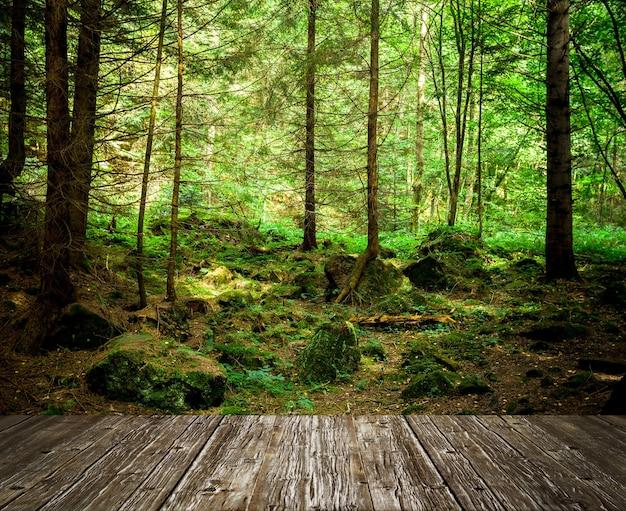 森の木自然緑の木の日光 Premium写真