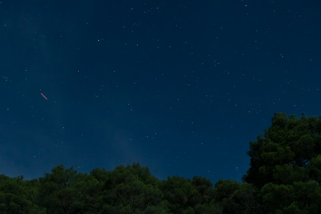 Forest with blue night sky Free Photo