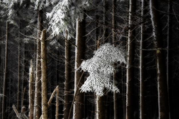Лес с голыми деревьями, покрытыми снегом Бесплатные Фотографии