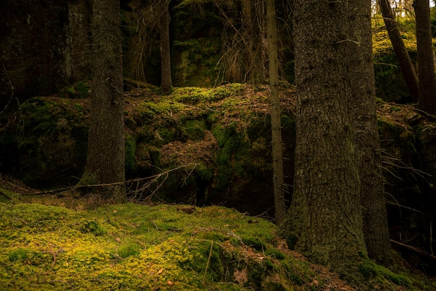 Forest with moss on the ground Free Photo