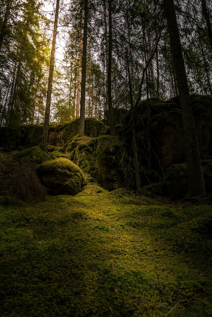 Foresta con il sole che splende attraverso i rami Foto Gratuite