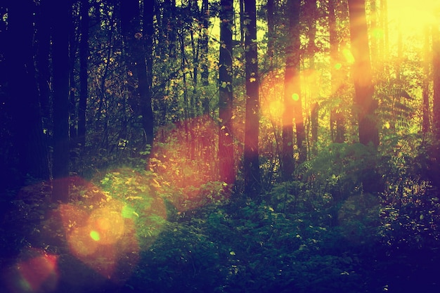 Forest with sunbeam Free Photo
