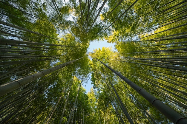 나무와 숲을 닫습니다. 무료 사진