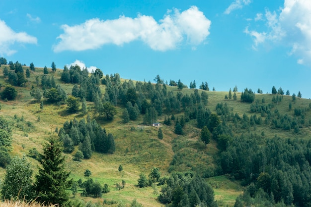 Forests of evergreen coniferous trees on mountain landscape Free Photo