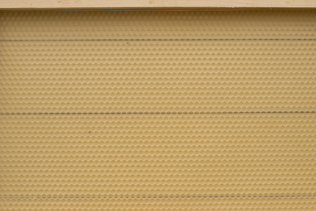 Foundation for building honeycombs. Premium Photo