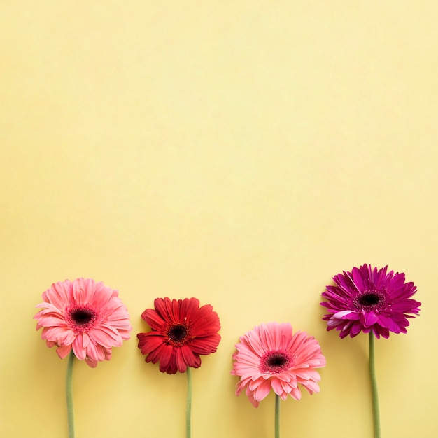 Four beautiful flowers Photo | Free Download